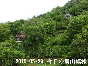 2019-05・29 今日の里山模様・・・ (5).JPG