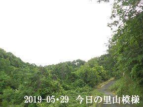 2019-05・29 今日の里山模様・・・ (6).JPG