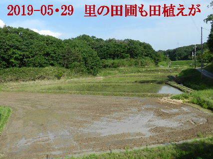 2019-05・29 今日の里山模様・・・ (9).JPG