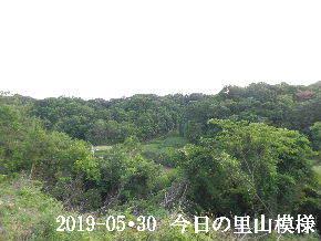 2019-05・30 今日の里山模様・・・ (3).JPG