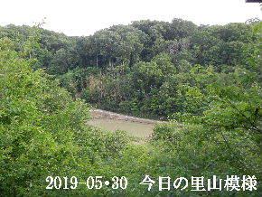 2019-05・30 今日の里山模様・・・ (4).JPG