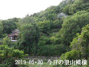 2019-05・30 今日の里山模様・・・ (5).JPG