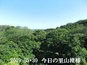 2019-05・30 今日の里山模様・・・ (7).JPG