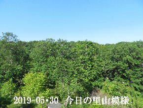 2019-05・30 今日の里山模様・・・ (8).JPG