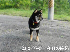 2019-05・30 今日の麻呂 (1).JPG