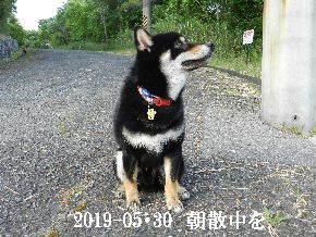 2019-05・30 今日の麻呂 (2).JPG