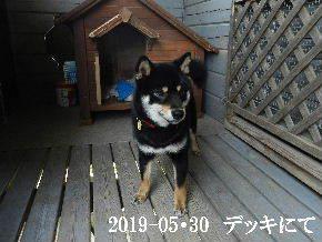 2019-05・30 今日の麻呂 (5).JPG
