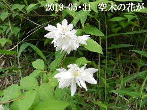 2019-05・31 今日の出遭い・・・ (2).JPG