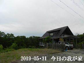 2019-05・31 今日の里山模様・・・ (1).JPG