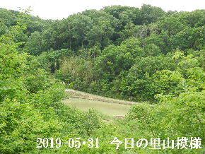 2019-05・31 今日の里山模様・・・ (3).JPG