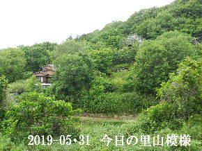 2019-05・31 今日の里山模様・・・ (4).JPG