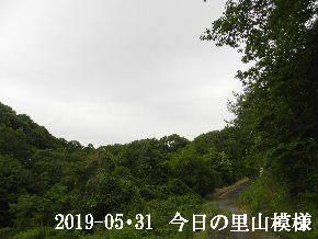 2019-05・31 今日の里山模様・・・ (5).JPG