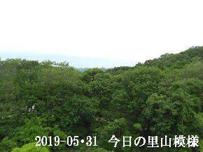 2019-05・31 今日の里山模様・・・ (6).JPG