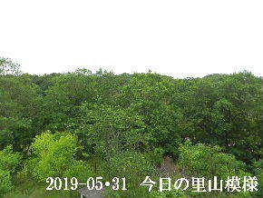 2019-05・31 今日の里山模様・・・ (7).JPG