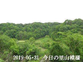2019-05・31 今日の里山模様・・・ (8).JPG