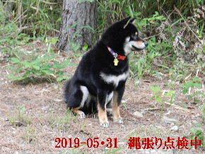 2019-05・31 今日の麻呂 (3).JPG