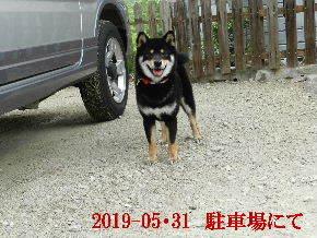 2019-05・31 今日の麻呂 (5).JPG