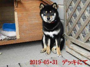 2019-05・31 今日の麻呂 (6).JPG