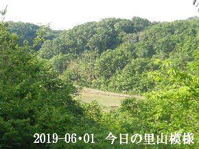 2019-06・01 今日の里山模様・・・ (3).JPG