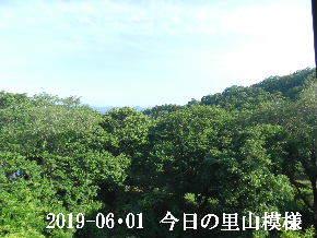 2019-06・01 今日の里山模様・・・ (5).JPG