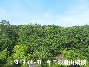 2019-06・01 今日の里山模様・・・ (6).JPG