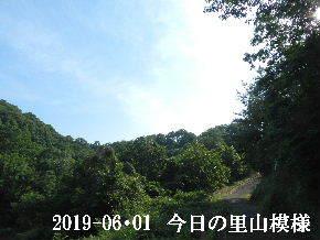 2019-06・01 今日の里山模様・・・ (8).JPG