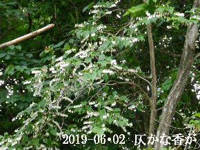 2019-06・02 今日の出遭い・・・ (1).JPG