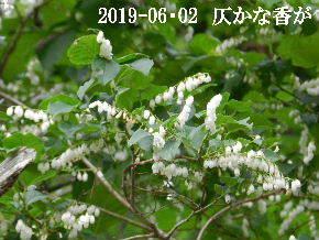 2019-06・02 今日の出遭い・・・ (2).JPG
