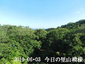 2019-06・03 今日の里山模様・・・ (5).JPG