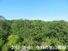2019-06・03 今日の里山模様・・・ (6).JPG