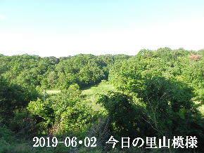 2019-06・03 今日の里山模様・・・ (7).JPG