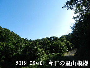 2019-06・03 今日の里山模様・・・ (8).JPG
