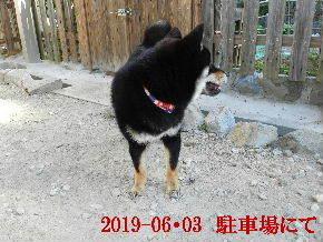 2019-06・03 今日の麻呂 (5).JPG