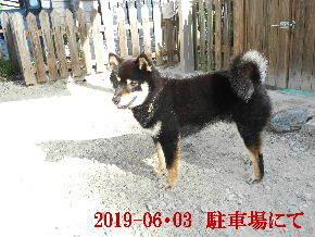2019-06・03 今日の麻呂 (6).JPG