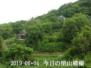2019-06・04 今日の里山模様・・・ (4).JPG