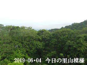 2019-06・04 今日の里山模様・・・ (5).JPG