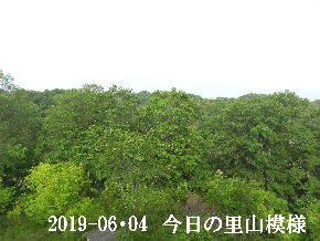 2019-06・04 今日の里山模様・・・ (6).JPG
