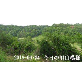 2019-06・04 今日の里山模様・・・ (7).JPG