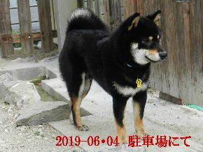 2019-06・04 今日の麻呂 (3).JPG