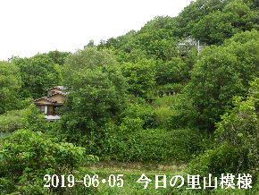 2019-06・05 今日の里山模様・・・ (4).JPG