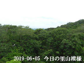 2019-06・05 今日の里山模様・・・ (5).JPG