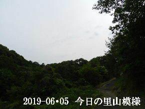 2019-06・05 今日の里山模様・・・ (8).JPG