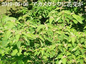 2019-06・06 今日の出遭い・・・ (1).JPG