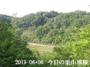 2019-06・06 今日の里山模様・・・ (3).JPG