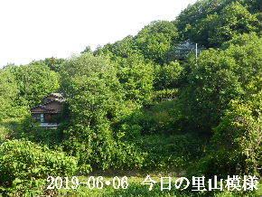 2019-06・06 今日の里山模様・・・ (4).JPG