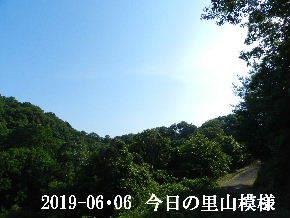 2019-06・06 今日の里山模様・・・ (8).JPG
