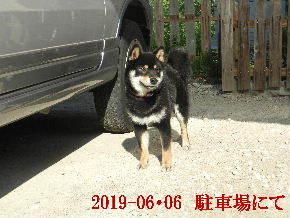 2019-06・06 今日の麻呂 (5).JPG