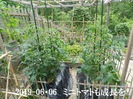 2019-06・06 我が家のスナップ・・・ (4).JPG
