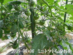 2019-06・06 我が家のスナップ・・・ (5).JPG