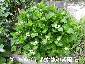 2019-06・06 我が家の庭で・・・ (1).JPG